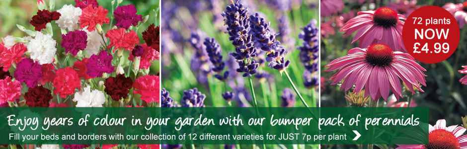 72 perennial plants NOW £4.99