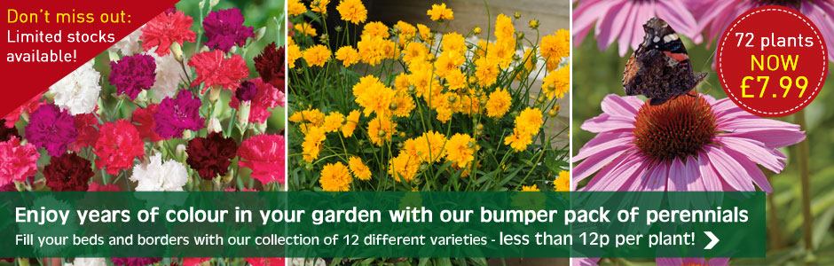 72 perennial plants NOW ONLY £7.99
