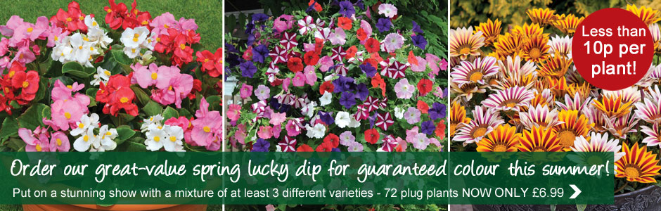 Spring Plant Lucky Dip now £6.99