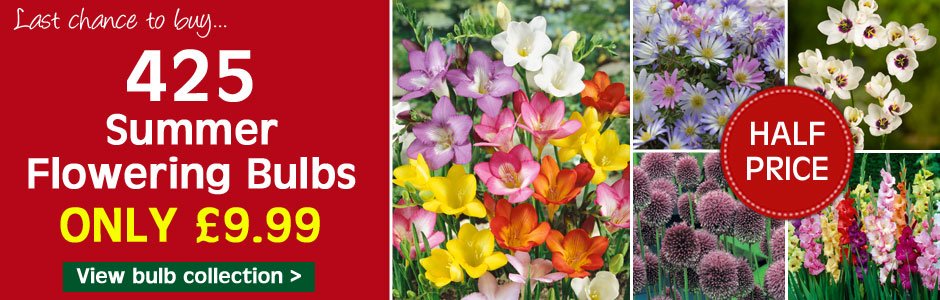 425 summer flowering bulbs just £9.99