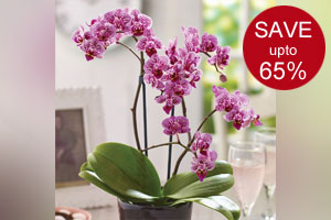 Houseplant Clearance Sale