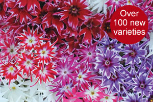 New spring varieties now available