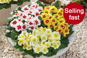 Varieties Despatching This Month