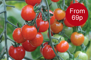 Value seed from just 69p