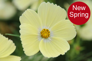 The new range of plants and seeds for spring 2017