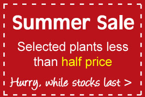 Selected plants less than half price in our SPRING SALE
