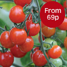 Value Seeds - from just 69p a packet