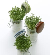cress in glass