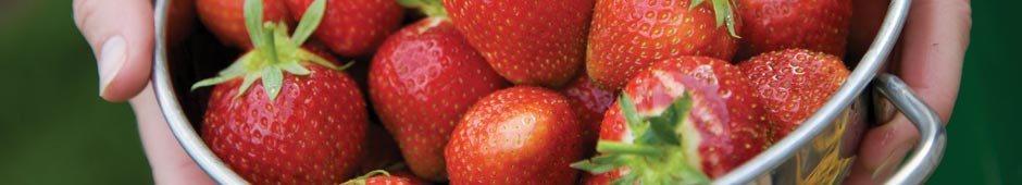 how to grow strawberries guide