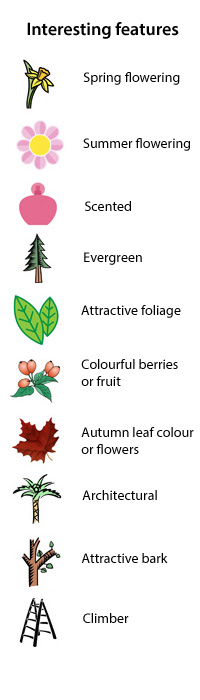 native versus non-native - interesting features - Scented, evergreen, attractive foliage, colourful berries and fruit, autumn leaf colour