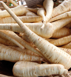Pile of Parsnip Varieties
