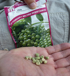 Different types of peas