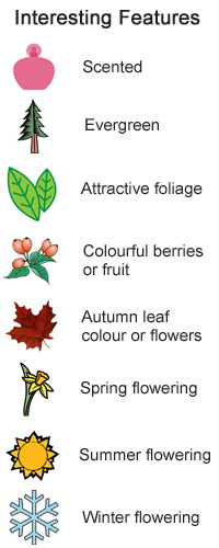 Plants for shade - Interesting features - Scented, Evergreen, Attractive Foliage, Colourful berries or fruit, Autumn Leaf Colour or Flowers, Summer Flowering, Spring Flowering, Winter Flowering