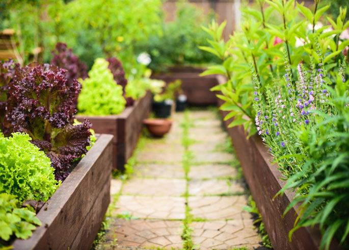 How To Grow Plants In Raised Beds Thompson Morgan