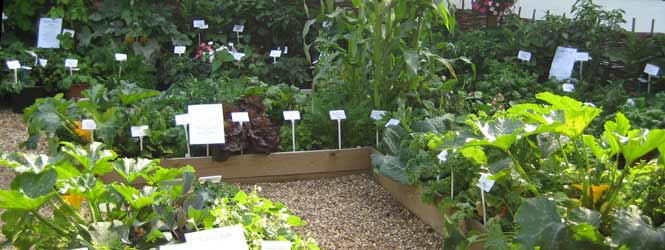 How to grow plants in raised beds thompson morgan Raised bed vegetable gardening for beginners