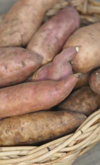 What are sweet potatoes?