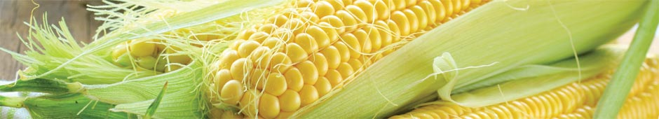 How to grow sweetcorn