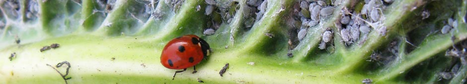 natural pest control for wildlife gardens
