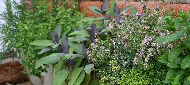 flowering herbs for wildlife