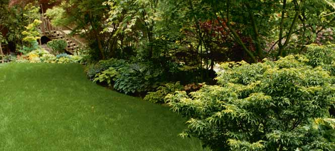 trees and shrubs border