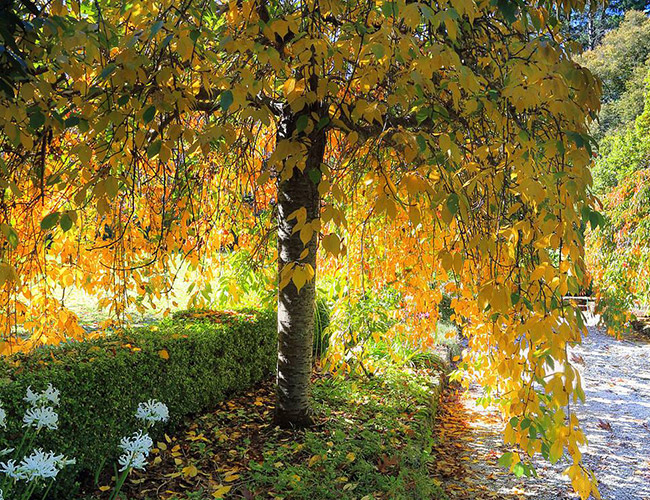 tree outdoors with yellow leaves