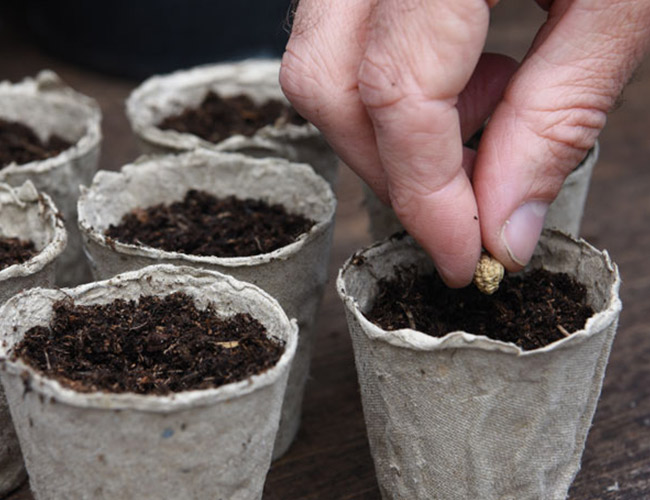 Seed Sowing Guide Thompon Morgan
