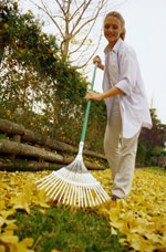 Collect leaves to make leaf mould