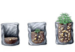 Growing potatoes in grow bags - top up compost as the plants grow