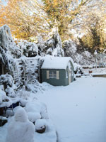 Brush heavy snow off hedges and conifers