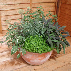 How To Grow Herbs Thompson Morgan