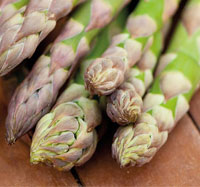 Plant asparagus crowns now into rich, fertile soil