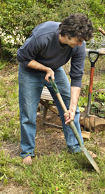 Prepare your perennial vegetable beds