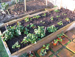 Raised beds warm up quicker and drain faster on heavy soil
