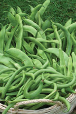 Pick your runner beans regularly