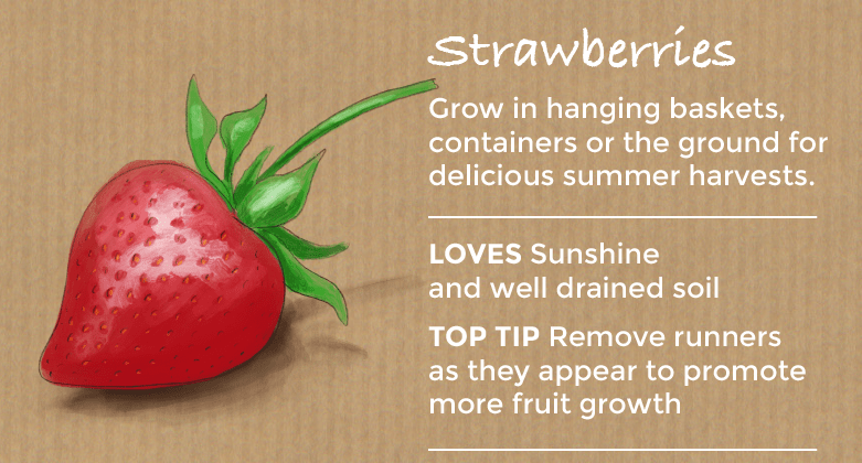 top ten easy to grow fruit - strawberries