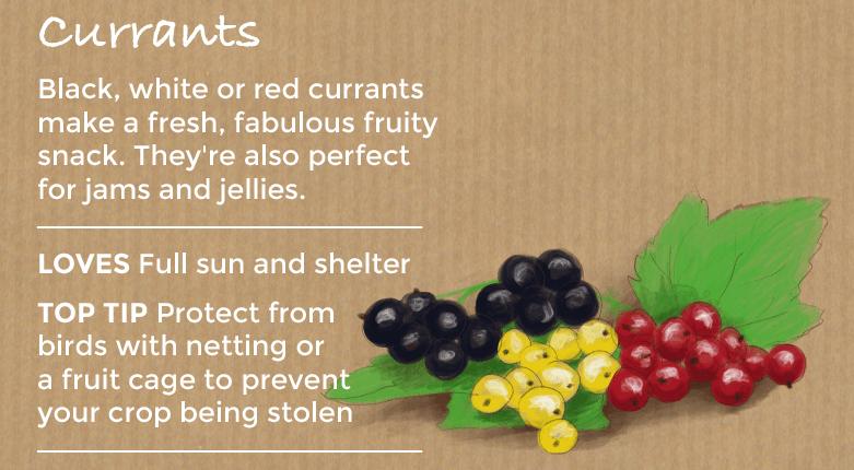 top ten easy to grow fruit - currants