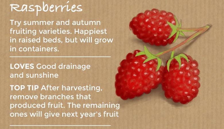 top ten easy to grow fruit - raspberries