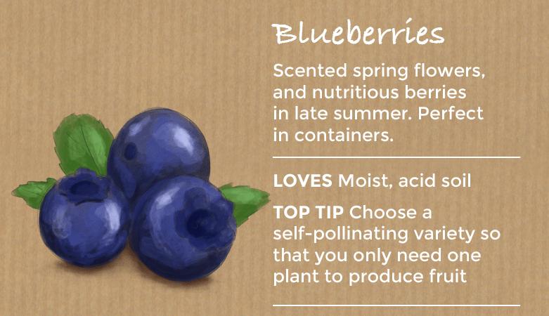 top ten easy to grow fruit - blueberries