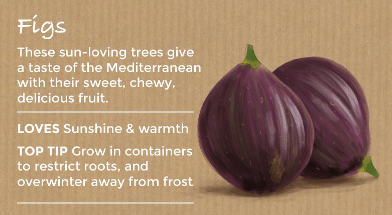 top ten easy to grow fruit - figs