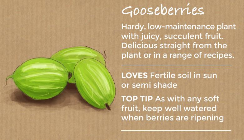 top ten easy to grow fruit - gooseberries