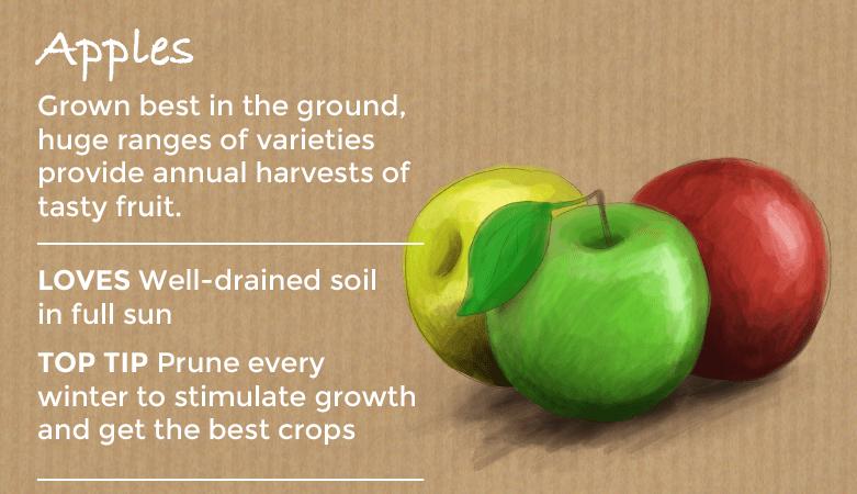 top ten easy to grow fruit - apples
