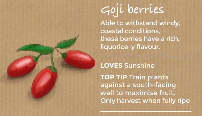 top ten easy to grow fruit - goji berries