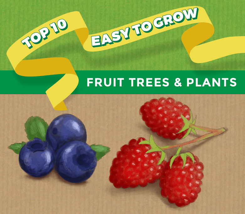 Top 10 Easy To Grow Fruit Trees And Plants For Beginners