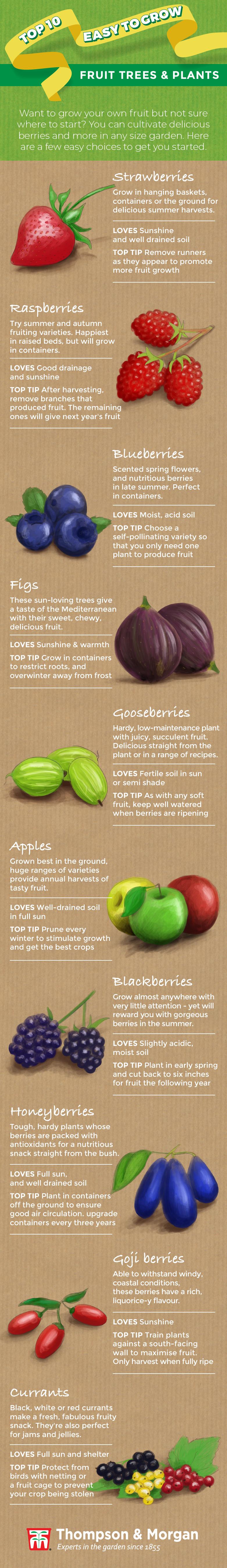 top ten easy to grow fruit infographic