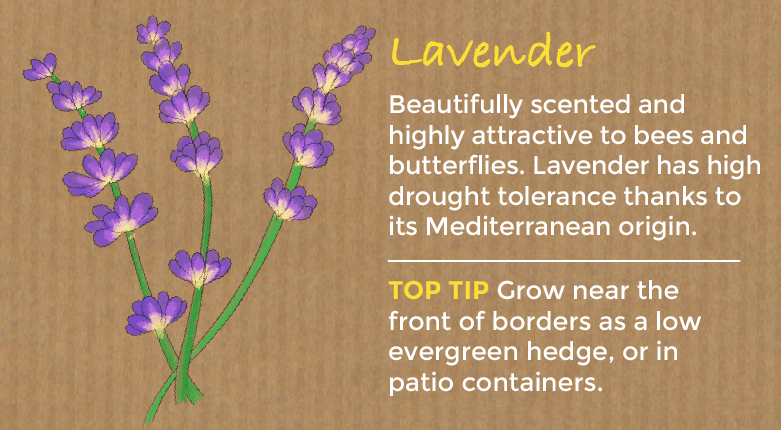 Although Technically A Shrub We Have To Mention Lavender As One Of Our Top Perennial Plants Well Loved For Its Fragrant Summer Flowers And Scented