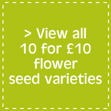 View all 10 for £10 flower seed varieties