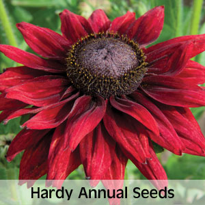 View hardy annual seeds