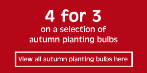 4 for 3 on selected autumn planting bulbs