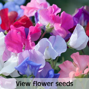 View flower seeds