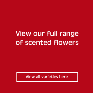 scented flowers range